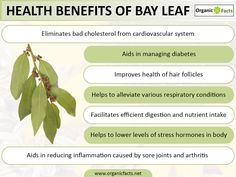 """Some of the most impressive health benefits of bay leaves include their ability to detoxify the body, slow the aging process, speed wound healing, protect the body from bacterial infections, manage diabetes, improve heart health, reduce inflammation, alleviate respiratory issues, optimize digestion, and prevent certain types of cancer. Bay leaves are many different types of plants whose leaves are referred to as """"bay leaves"""", but the true bay leaf is scientifically known as Laurus nobilis…"""