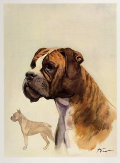 Vintage Boxer Print of a Boxer Art Boxer Illustration Childrens Room and Nursery Decor Dog Gallery Wall Art Birthday Gift for Dog Lover 3278 by plaindealing on Etsy