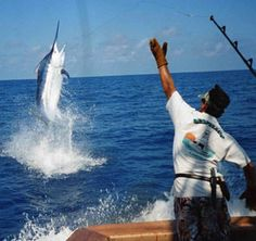 At The Top of Jordan's Bucket List: Deep Sea Fishing for Blue Marlin! At The Top of Jordan's Bucket List: Deep Sea Fishing for Blue Marlin! Fishing Life, Sport Fishing, Gone Fishing, Best Fishing, Costa Rica Adventures, Marlin Fishing, Blue Marlin, Offshore Fishing, Fishing Pictures