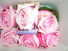 David Austin Miranda garden rose David Austin, Garden Roses, Cut Flowers, Roses Garden