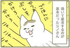 シノさんの進化 | ねこナビ