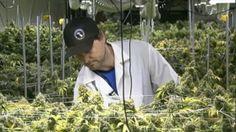 MARIJUANA JOB FAIR WEBSITE PROVIDES CANNABIS INDUSTRY INFORMATION | CannaMagazine.com #MarijuanaJobFair #Cannabis #Industry #Information #Website #CannaMag #Business #Marijuana