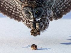 15 Perfectly Timed Photos of Animals