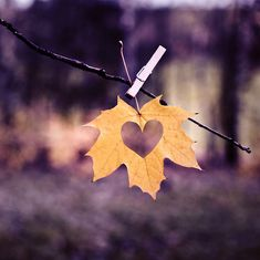 A heart cut-out in an autumn leaf - what a lovely idea for someone you love who may be celebrating something special during the season...  #freemanautumn