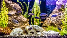 When you're stocking your aquarium, don't forget about the right filtration for your tank. Here are our picks for the best aquarium power filters you can buy. If you want to keep your aquarium water clean and clear for the benefit of your fish, filtration Aquariums, Best Aquarium Fish, Aquarium House, Big Fish Tanks, Cichlid Aquarium, Aquarium Maintenance, Easy Pets, Fish Stock, Aquarium Fish