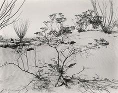 Texas Desert  1946