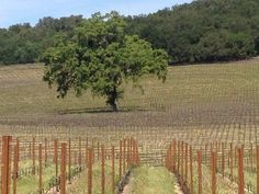 Proulx Winery. Some of the best reds in Paso Robles.