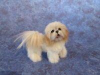 Dollhouse Miniature Dog ~ Lhasa Apso ~ OOAK Handmade Igma Artisan Julie Parrott
