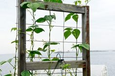 Add more growing space to your bed by building a trellis.