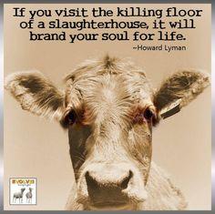 #vegan #vegetarian