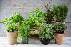 Few things will step up your cooking quite like always having fresh herbs to hand. Luckily, growing herbs is possible in or around almost…