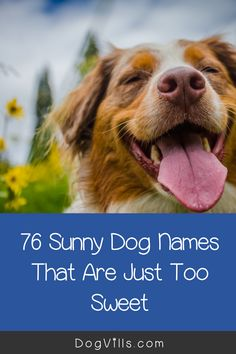 This list of 76 sunny dog names will come in handy when you get yourself a new pup!    Hey, sometimes we need inspiration to choose the best names for our dogs, right?    Why not celebrate all things bright and cheery with these ideas! All About Puppies, Small Puppies, Dog Corner, Dog Spaces, Giant Dogs, Cute Baby Dogs, Dog Training, Training Tips, Funny Dog Pictures