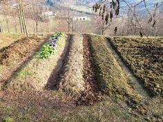 Un orto che non ha bisogno di acqua: ecco come realizzarlo!