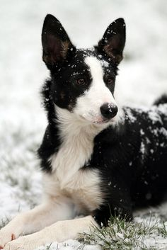 Now I think Brian may be a boarder collie mix...shepard...doggy