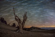 Photo of star trails by Dan Barr
