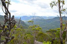 Mount Bushwalker Walking Track - Morton National Park - New South Wales New South, South Wales, National Parks, Lens, Track, Walking, Australia, Mountains, Nature