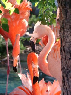 These flamingos are too pretty to be real! Flamingo Rosa, Flamingo Art, Pink Flamingos, Flamingo Wallpaper, Pretty Birds, Love Birds, Beautiful Birds, Pretty In Pink, Como Zoo