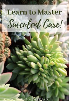 Learn everything you need to know to grow healthy, happy succulents!  Discover clear, accessible articles on how to water succulents, the best succulent soil, how much sunshine succulents need, protecting succulents from pests and so much more! You can do this!  #succulentcare #howtowatersucculents  #succulentcareinstructions #succulentcareguide
