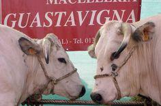 TASTE THE FOOD: la MACELLERIA GUASTAVIGNA è un indirizzo sicuro per chi vuol trovare tagli di carne di alta qualità.  www.salottidelgusto.com