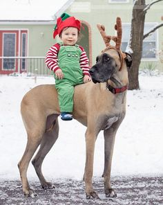 "One of Santa's little-known ""Dogdeer"":: Along with one of his mini-me elves.. ."