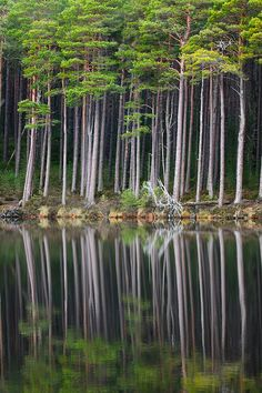 ✯ Loch Ancient Forest - Scotland, UK