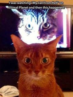 Quando a personagem se identifica com el gatonAnother funny pic, repin if you like it!