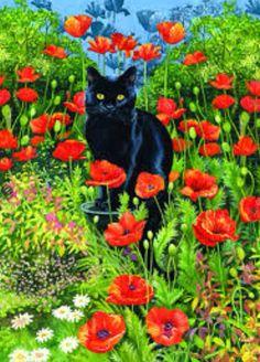 Cat in Poppy Garden