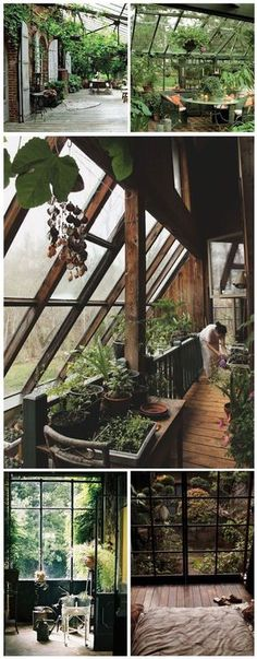 indoor / outdoor #conservatorygreenhouse