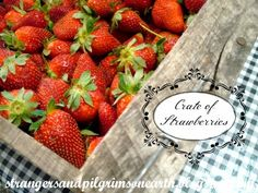 Strangers & Pilgrims on Earth: A Crate of Strawberries ~ Miscellaneous Musings