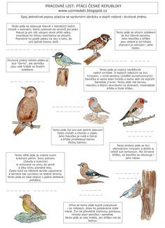 Pracovní list: Ptáci České republiky Birds, Animals, Montessori, School, Children, Ideas, Young Children, Animales, Boys
