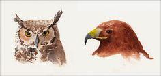 Aude-Noelle Nevius - Blog: Sketching at the Raptor Center
