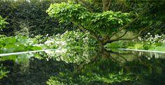 reflective water... my favorite ! Chelsea garden show 2008, Tom Stuart Smith.