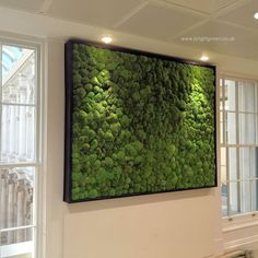 Preserved Bun Moss Wall Panel with a Black Frame in an Office
