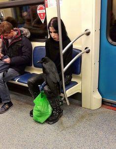 Wenn du nasse Füße in der Straßenbahn bekommst, deinen Hund im Rucksack tragen musst und dein Ticket mit Frühbucher-Rabatt direkt…