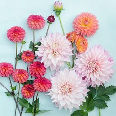 Dahlias from my 2014 garden.  Thank you for your kind comments on my last post. 💜 Just wanted to let those of you who don't know already, I like to tuck seeds into every order from the Hedgerow Rose shop and I still have some Lauren's Grape poppy seeds left. See story for details! 💜