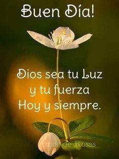 Good Morning Messages, Good Morning Quotes, Good Morning Images Flowers, Biblical Verses, Spirituality, Backyard, Plants, Spanish, Amazing