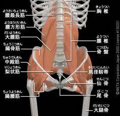 筋肉痛<3> ~大腰筋一部機能不全の影響?~ - SUNAOなカラダ