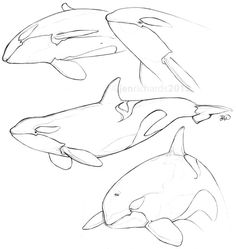 Sketch of Orca. You are in the right place about animal drawing wallpaper Here Arte Orca, Orca Art, Orca Tattoo, Animal Sketches, Animal Drawings, Drawing Sketches, Orca Kunst, Whale Drawing, Whale Sketch