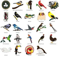 Many birds, You could cut them out Jenn | Birds! | Pinterest ...