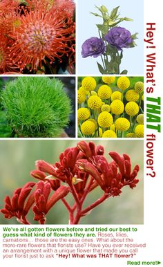 "We've all gotten flowers before and tried our best to guess what kind of flowers they are. Roses, lilies, carnations… those are the easy ones. What about the more-rare flowers that florists use? Have you ever received an arrangement with a unique flower that made you call your florist just to ask ""Hey! What was THAT flower?"""