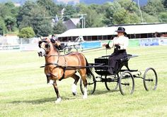 Photo Archive Royal Welsh Show Driving - Wagons- A/B 2013 : Rainhill Welsh Cobs