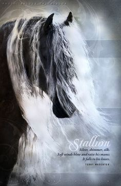 Silver, shimmer, silk.  Soft winds blow and raise his mane;  It falls to his knees.  ~Terry Waechter    Photo by Baldur Tryggvason  Art by PixelGraphix