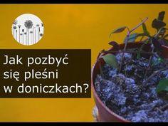 Indoor Plants, Gardening, Tips, Youtube, Inside Plants, Lawn And Garden, Youtubers, Youtube Movies, Horticulture