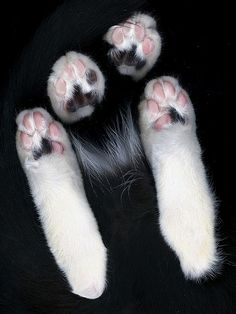 Cats leave paw prints on your heart.  ♡ =^.^= ♡