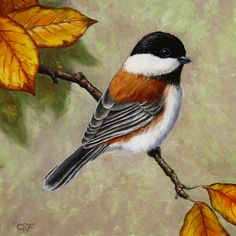 Chickadee - Autumn Charm ~ Crista Forest