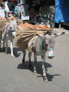 Working donkeys, India - hope the loads are not too heavy