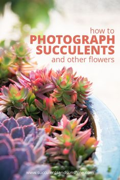 Three great tips for taking better photos of succulents and flowers