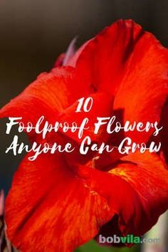 Green thumb or brown thumb, these low-maintenance flowers are so easy that any gardener can grow them. Beautiful Flowers Garden, Beautiful Gardens, Gardening For Beginners, Gardening Tips, Flower Gardening, Container Gardening, Backyard Ideas For Small Yards, Modern Backyard, Lawn And Garden