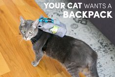 You Cat Wants a Backpack