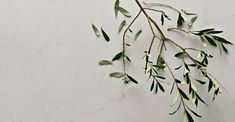 http://www.caesarstone.co.nz/colour/5141-frosty-carrina